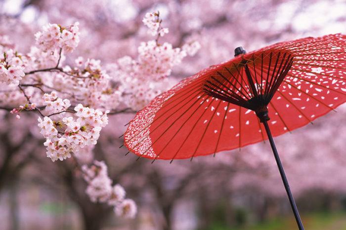 Туры на цветение сакуры!