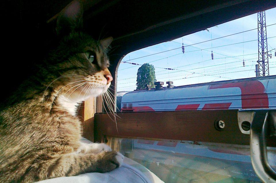 Как провозить животных в поезде?