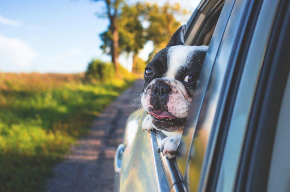 Как путешествовать с питомцами на авто?